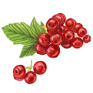 Raudonieji serbentai